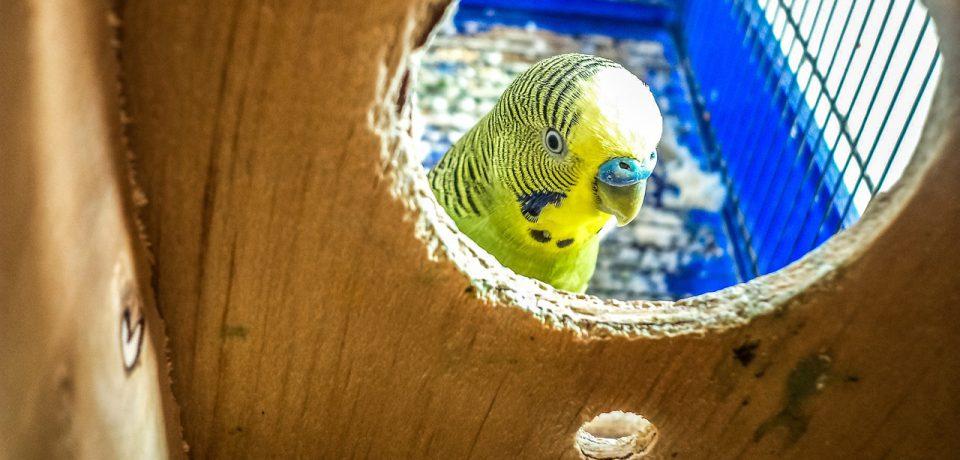Nestkasten bouwen in De Boerhoorn
