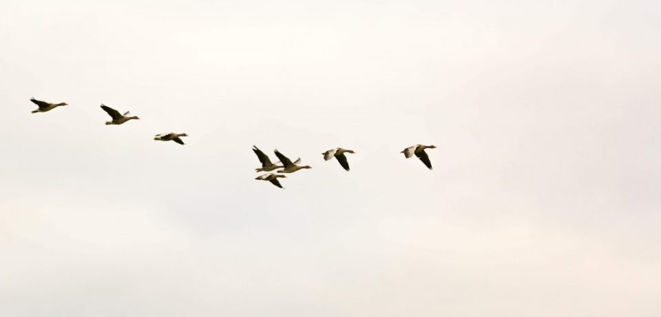 Per auto vogels spotten in Gaasterland