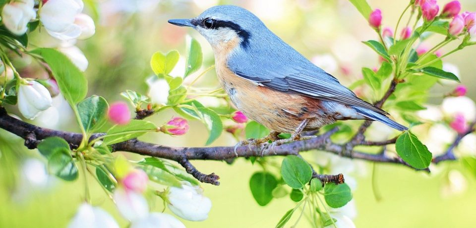 Lezing over vogelvriendelijk tuinieren