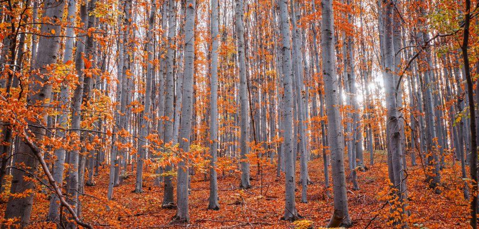 Herfst bij DNO